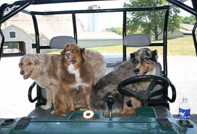 dogs in golf cart